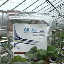 How Cilus Plus Can Benefit Your Crop